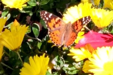 11-5-butterfly